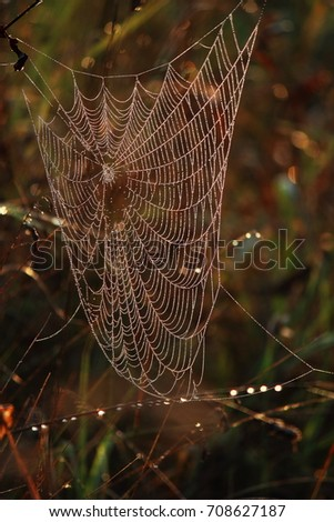 Natural background with a spider web and drops. morning sun  #708627187