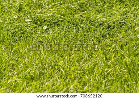 Background and texture of Beautiful green grass pattern from golf course #708652120