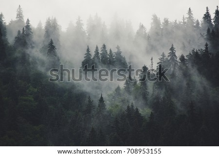 Misty landscape with fir forest in hipster vintage retro style Royalty-Free Stock Photo #708953155