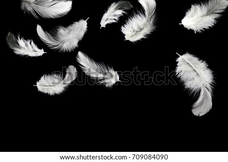 Abstract, soft white feathers floating in the air, isolated on black background #709084090