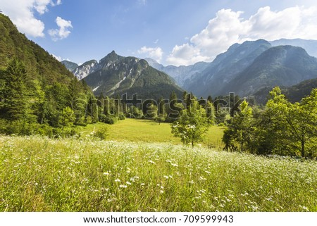 An open field with little sunflowers, trees and a mountain chain in the background in a sunny day with clouds. #709599943