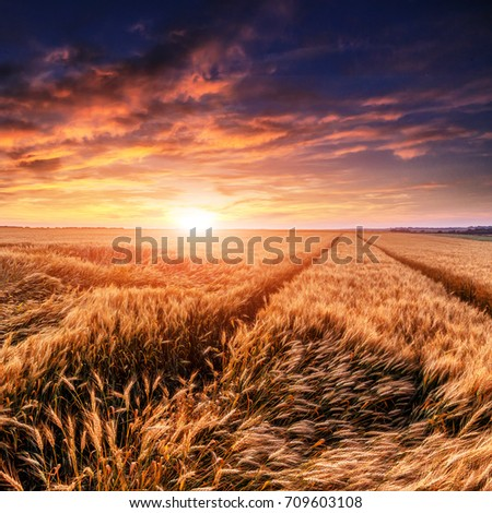 fantastic sunset at the wheat field. dramatic picturesque scene. majestic rural landscape. used as background. beauty in the world. creative image. rich harvest concept