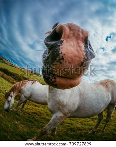 White Horses - photo taken using fish eye lens. Location - Co Louth. Ireland