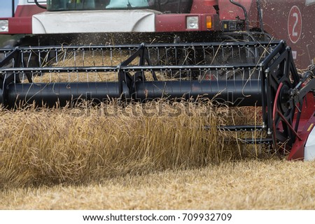 Combine harvester machine harvesting ripe wheat crops in cultivated agricultural field #709932709