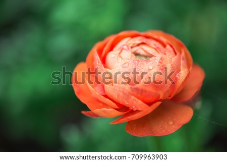 Colorful flower with droplets  #709963903