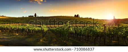 Beautiful vineyards at sunset in Tuscany, Italy. #710086837