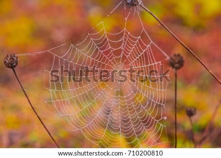 Spider webs #710200810