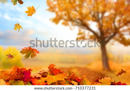 Beautiful  landscape with yellow trees,green grass and sun. Colorful foliage in the park. Falling  leaves natural background . #710377231