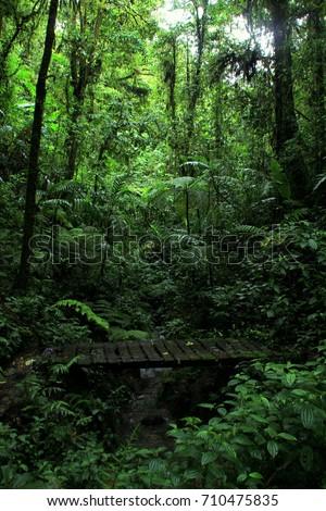 Monteverde jungle, Costa Rica #710475835