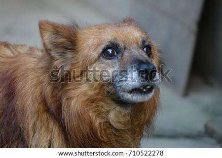 Old dog #710522278