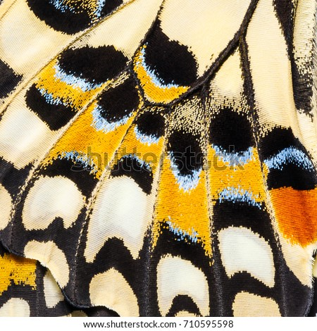 Butterfly wings texture, close up of wings of Lime butterfly or Lemon butterfly (Papilio demoleus) showing minute scales Royalty-Free Stock Photo #710595598