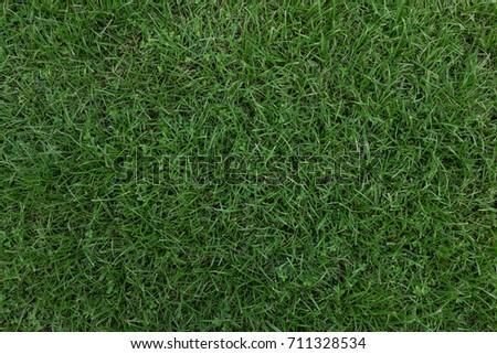 Grass #711328534
