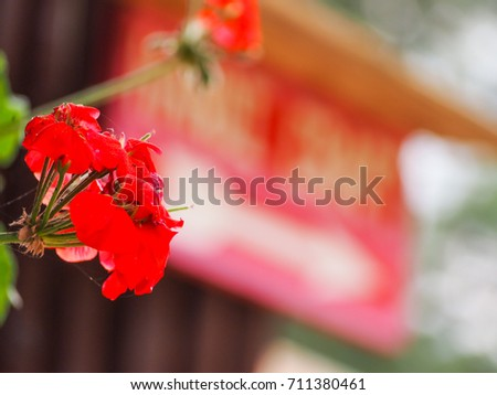 Red Flowers #711380461