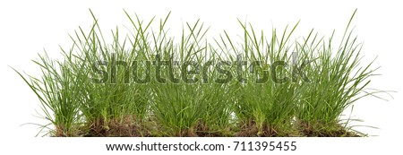 green fresh grass meadow isolated on white backgound #711395455
