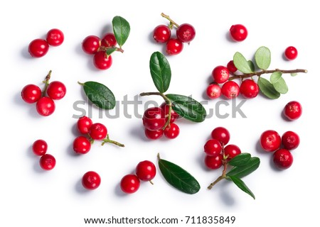 Lingonberry (fruits of Vaccinium vitis-idaea), top view. Clipping paths, shadow separated. Layers: goo.gl/kqAV4x  #711835849