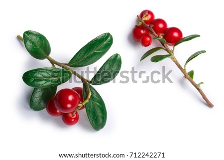 Lingonberry (fruits of Vaccinium vitis-idaea), top view. Clipping paths, shadow separated #712242271
