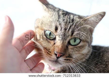 hand touch cute cat , cute cat feeling moody #712313833