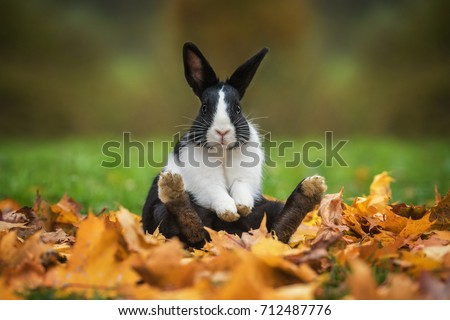 Little funny rabbit sitting in leaves in autumn Royalty-Free Stock Photo #712487776