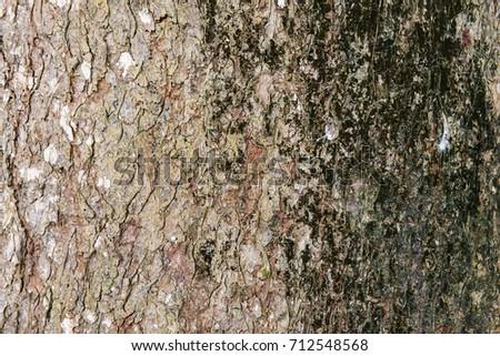 Tree bark skin exterior background trunk organic weathered grunge peel rustic detailed #712548568