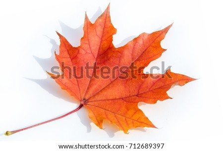Autumn still life of maple leaves. Warm colors of Autumn. Green and Yellow Autumn Maple Leaf  #712689397