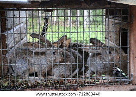fluffy cute curious live rabbits in a cage #712883440