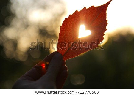 Autumn red leaf with cut heart in a hand #712970503