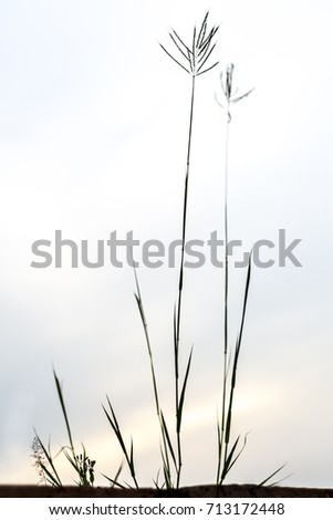 silhouette grass flower with sky