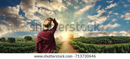 Farmer working on coffee field at sunset outdoor  Royalty-Free Stock Photo #713730646