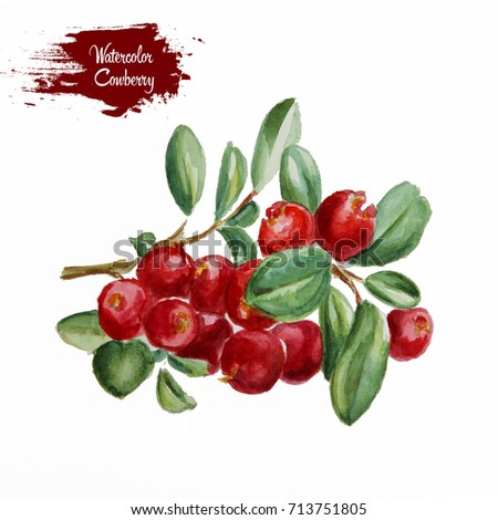 Cowberry with leaves #713751805