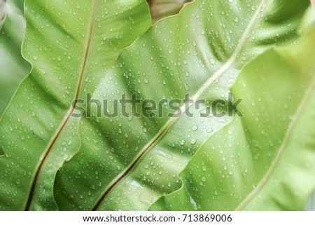 The green palm leaves are wet and fresh. #713869006