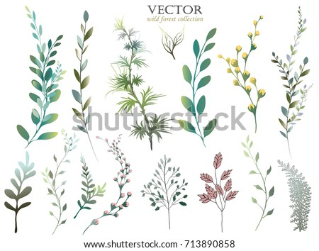 Vector Big Set watercolor elements - wildflower, herbs, leaf. collection garden, wild foliage, flowers, branches. illustration isolated on white background, eucalyptus, exotic, tropical leaf. Green.