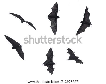 Bats, Fruit Bats Isolated on White Background Royalty-Free Stock Photo #713978227