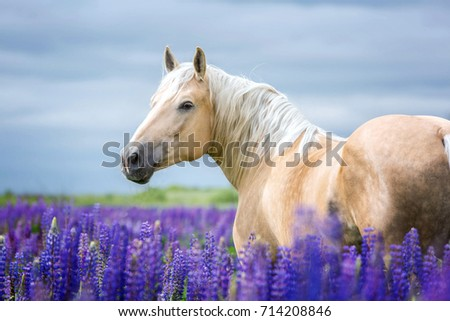 Portrait of a Palomino horse. #714208846