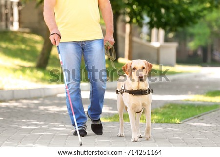 Guide dog helping blind man in the city #714251164