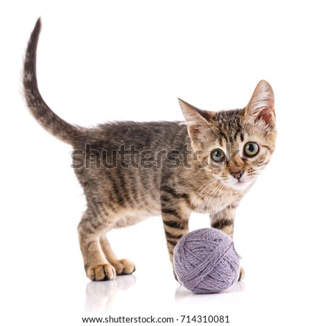 A kitten on a white background. The cat is playing with the ball. nba player #714310081
