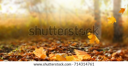 Beautiful autumn landscape with yellow trees and sun. Colorful foliage in the park. Falling leaves natural background  #714314761