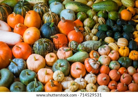 horizontal photo of heirloom diffrent varieties squashes and pumpkins