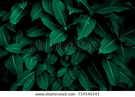 Green leaves pattern background, Natural background and wallpaper #714546541