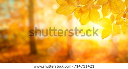 Autumn leaves on the sun. Fall blurred background. #714711421