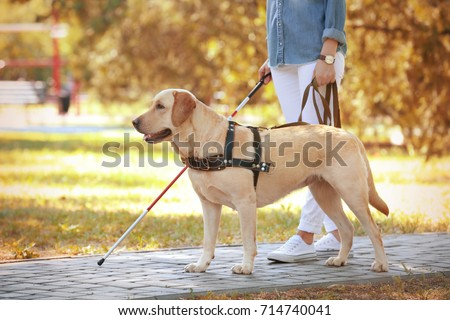 Guide dog helping blind woman in park #714740041