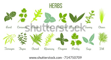 Big icon set of popular culinary herbs. Flat style. Basil, coriander, mint, rosemary, sage, basil, thyme, parsley etc. For cooking, cosmetics, store, health care, tag label, food design #714750709
