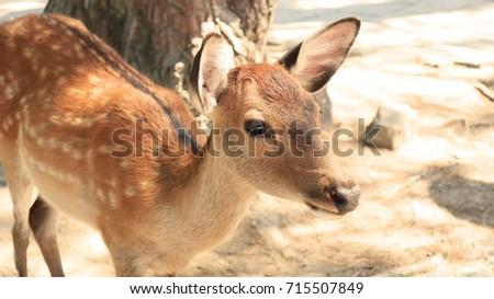Deer in Nara Park, Kansai, Japan #715507849