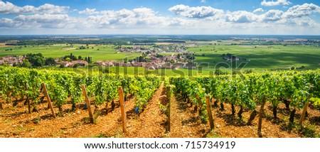 Vineyards of Burgundy, France  #715734919
