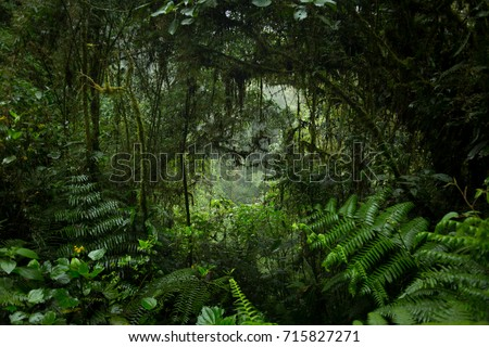 Jungle Tunnel Royalty-Free Stock Photo #715827271
