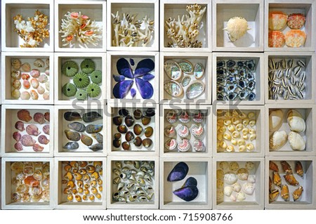 JEJU, SOUTH KOREA -20 JULY 2017- Collection of colorful seashells sorted in white cubby shadowboxes at the World Seashell Museum is located in Seogwipo on Jeju Island. #715908766