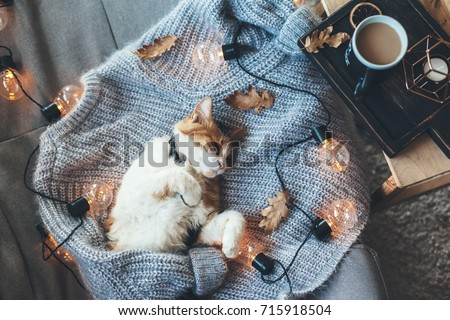 Lazy cat is sleeping on soft woolen sweater on sofa, decorated with led lights. Winter or autumn weekend concept, top view. #715918504