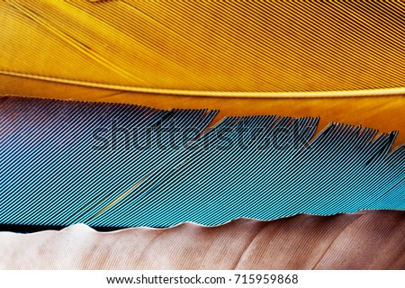 Feathers                    #715959868