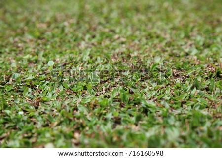 green leaf or grass background #716160598