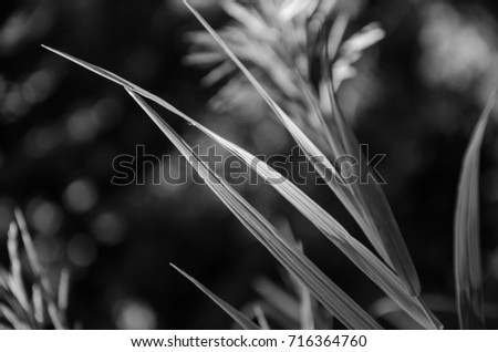 Blades of grass in the sun #716364760