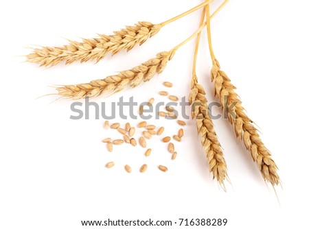 grain and ears of wheat isolated on white background. Top view #716388289